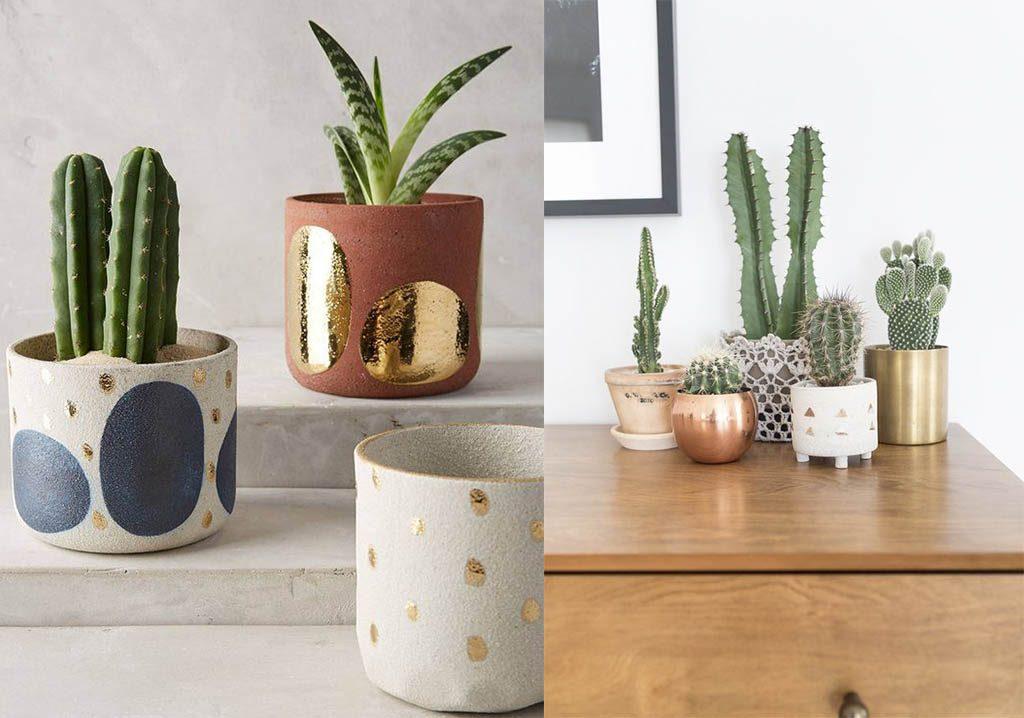 cactus en maceteros