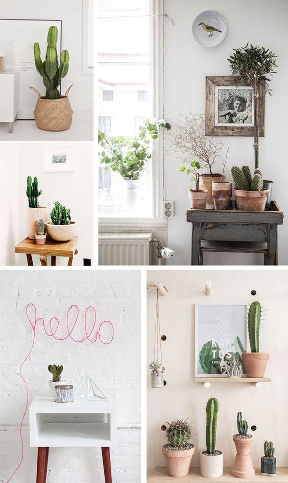 Como decorar cualquier habitacion con plantas de interior - Decorar con plantas de interior ...