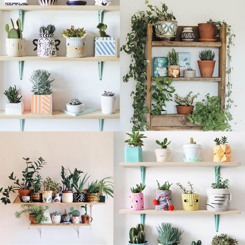 plantas de interior sobre baldas en la pared