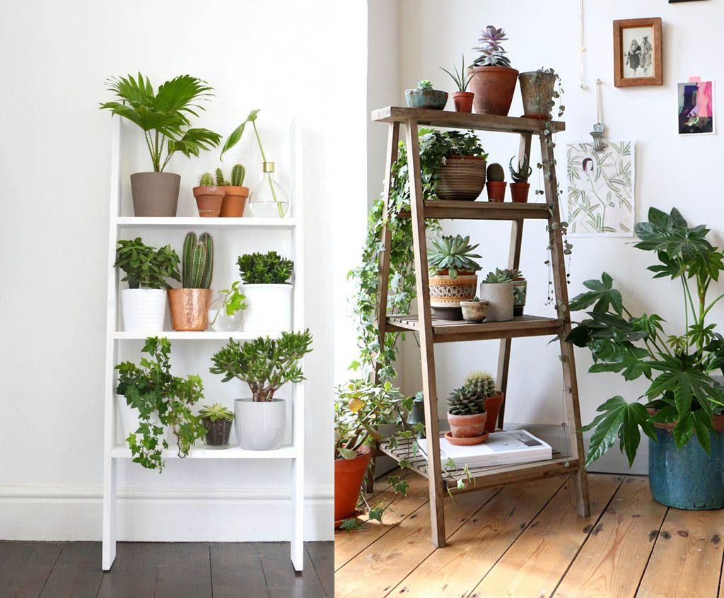 decorar una estantería con plantas de interior