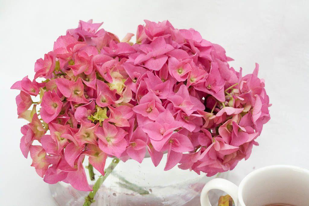 como mantener flores frescas en casa